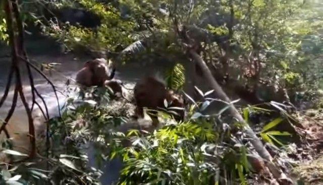 elephantsalutes7_e