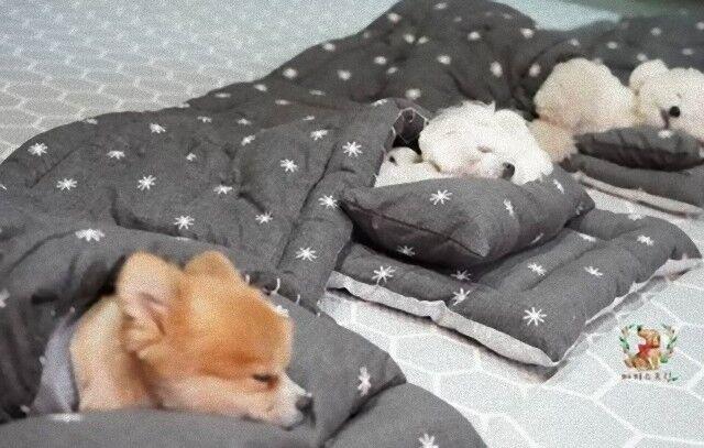 puppyspring0_e