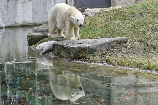 winking-polar-bear-cub-germany-13-58b7ce4a2881b__880_e