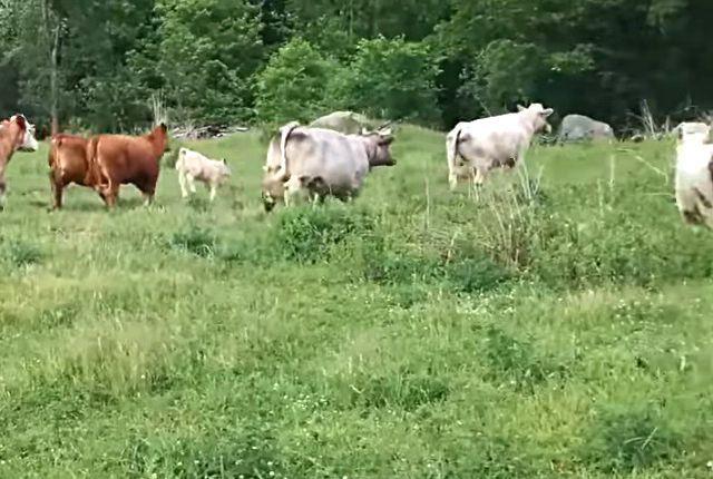 cowturtle6