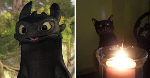 cats-toothless-lookalikes-024-57ceac7b1a337__700_e