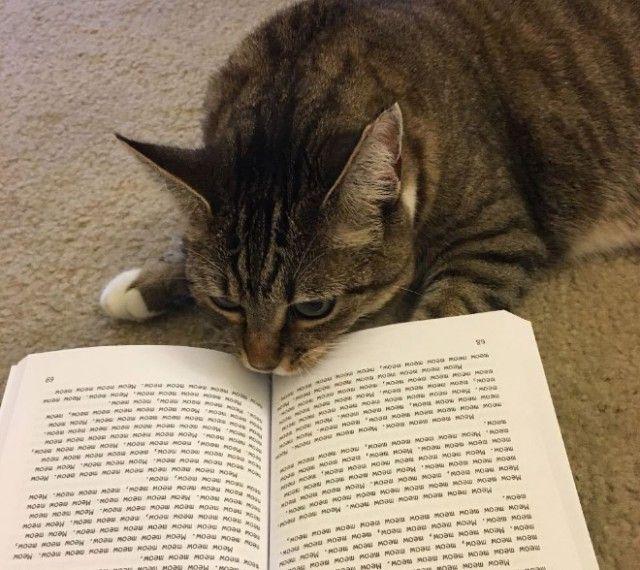 cats-vs-reading7_e