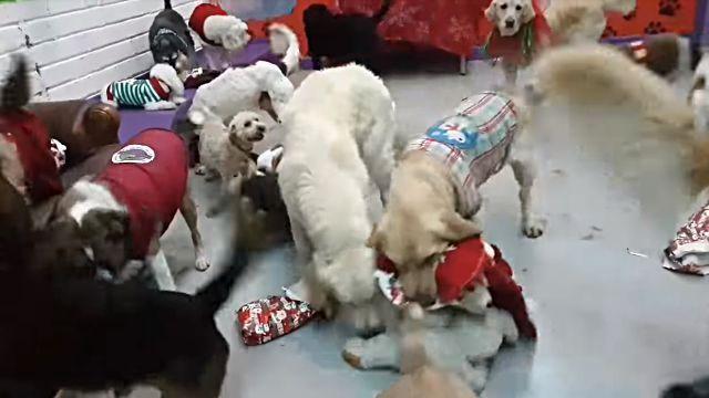 santadogs4