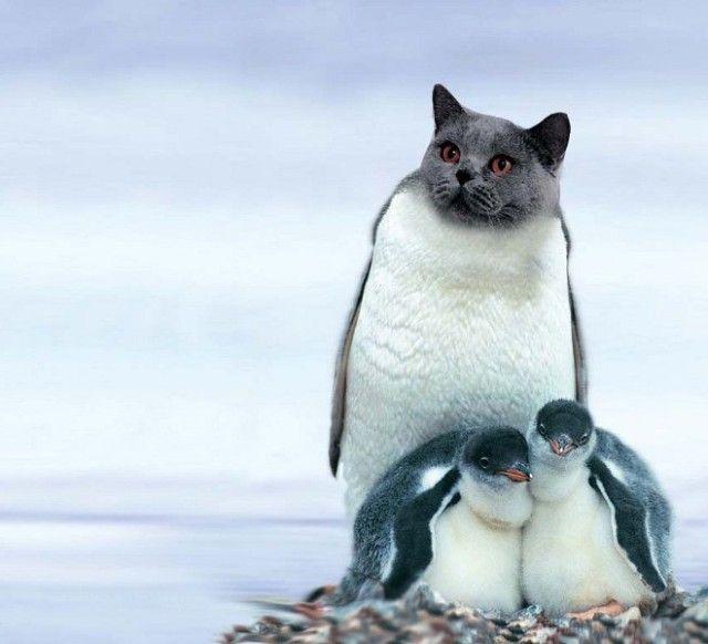 penguin9_e