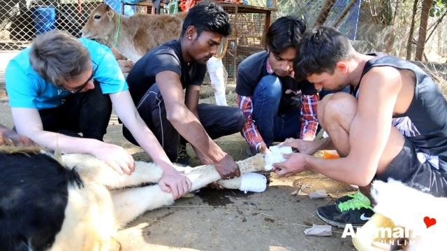 volunteeringatanimalaid13_e