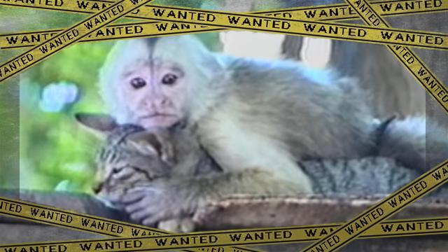 monkey-f [www-frame