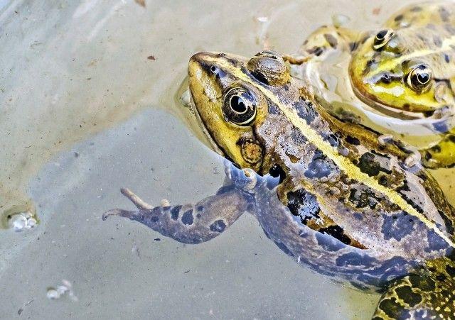 frog-1367440_960_720_e