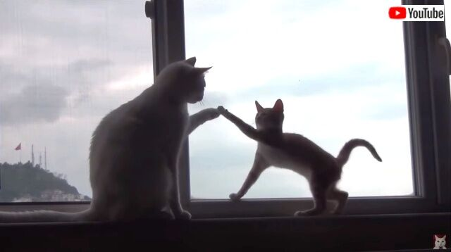 kittenwinsoldersheart2_640