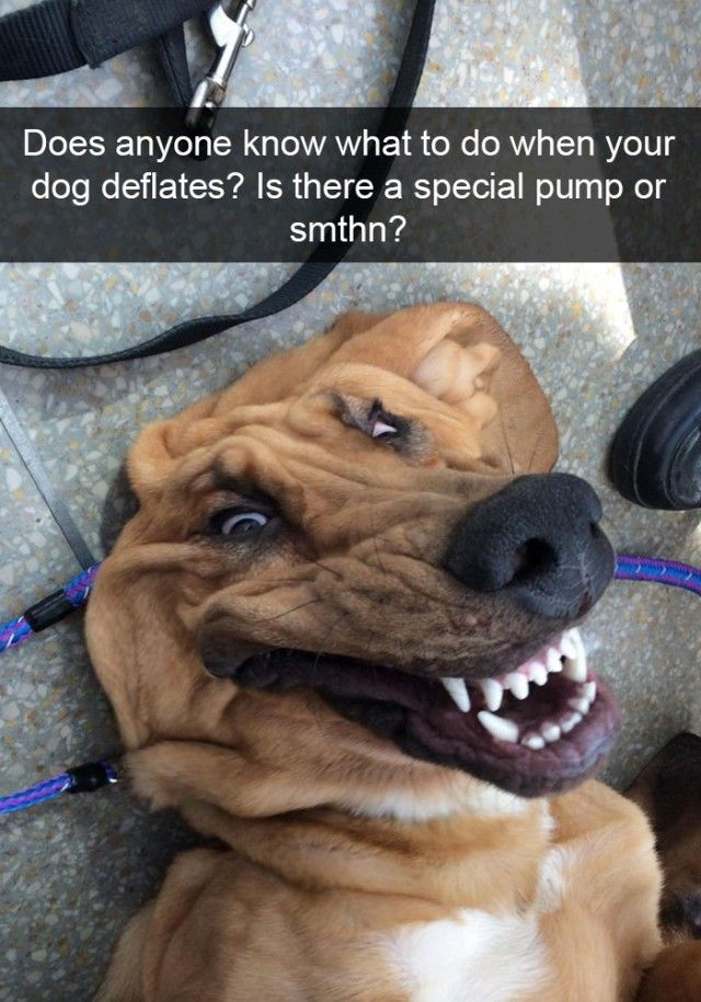 hilarious-dog-snapchats9_e