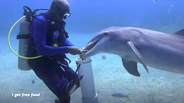 dolphinshark8