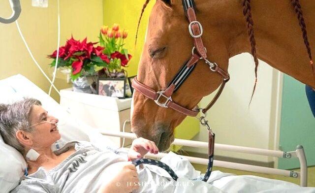 患者もドクターも看護師にも、みんなに癒しを届ける天使!馬のセラピスト、病院に笑顔を運び続ける