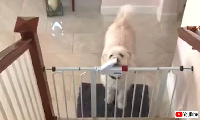 funniestdogs2_640