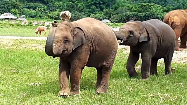 elephantplayingball2