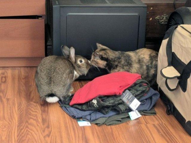 e2chz-cat-and-therapy-bunny-1_e