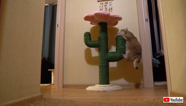 cactus8_640
