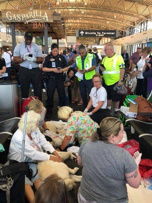 q5513-service-dog-gives-birth-at-airport-1_e