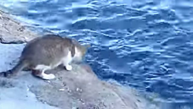 fishingcat3