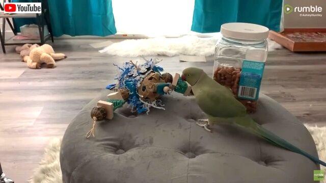 parrotreacts1_640