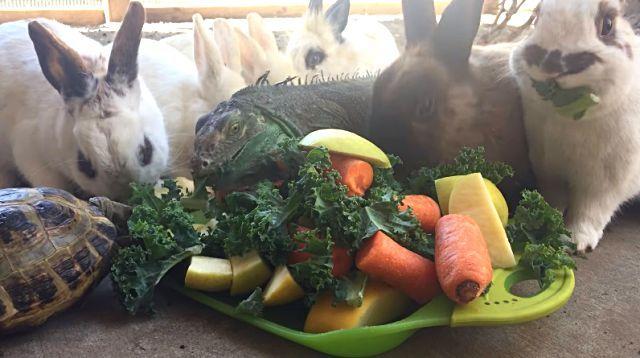vegetarians2