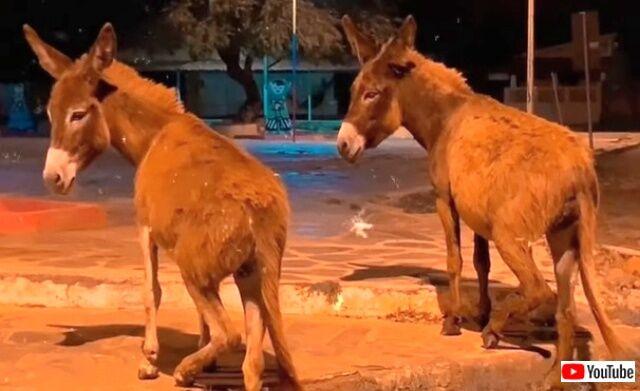 donkeysmove0_640