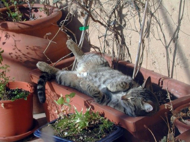 cat-plant7_e