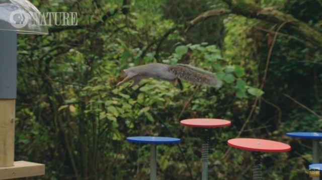 squirrelobstaclecourse5_e