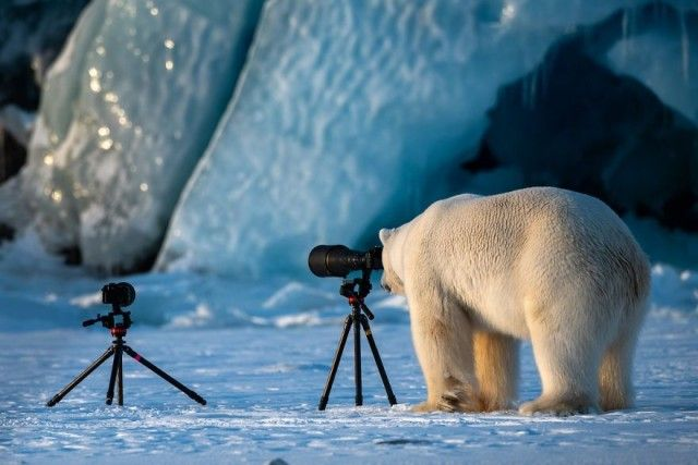 comedy-wildlife-photography-awards-finalists-2018- (16)