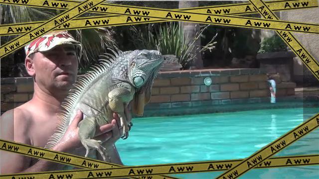 iguana-f [www-frame