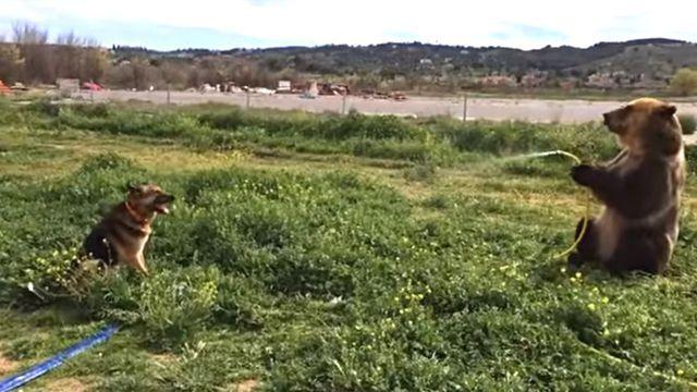 bearspraysdog0