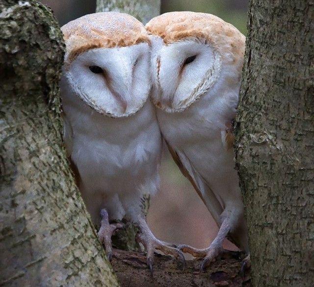 Owls (2)_e