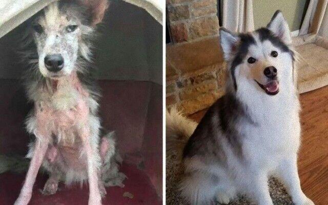 これからもずっとハッピーでいよう!保護犬たちの劇的なビフォーアフターの姿に涙