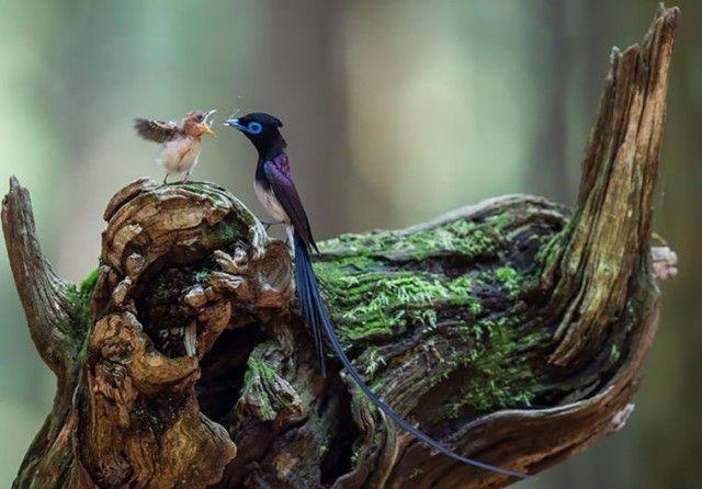 birdnbaby1_e