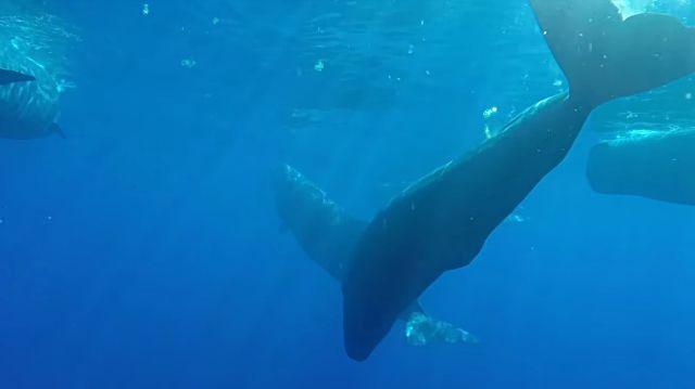 swimmingwwhales7