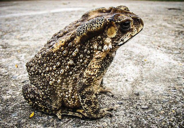 toad-185994_960_720_e