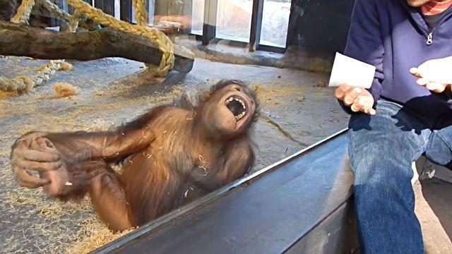 orangutanmagic3