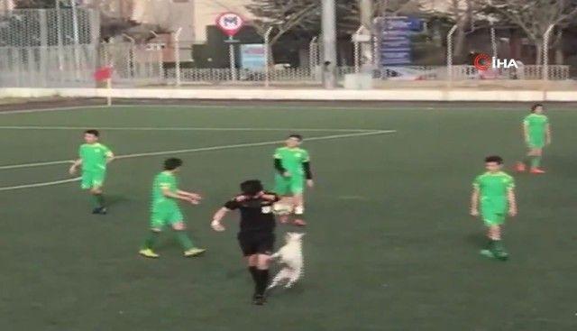 footballdog14_e