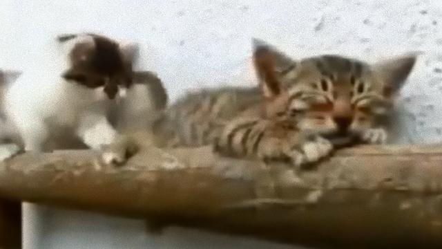 kitten-3_e