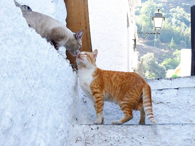 kissing_cats_e
