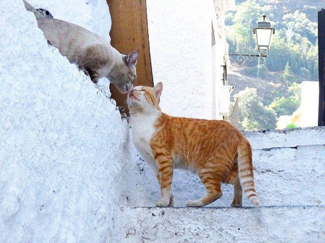 kissing_cats_e
