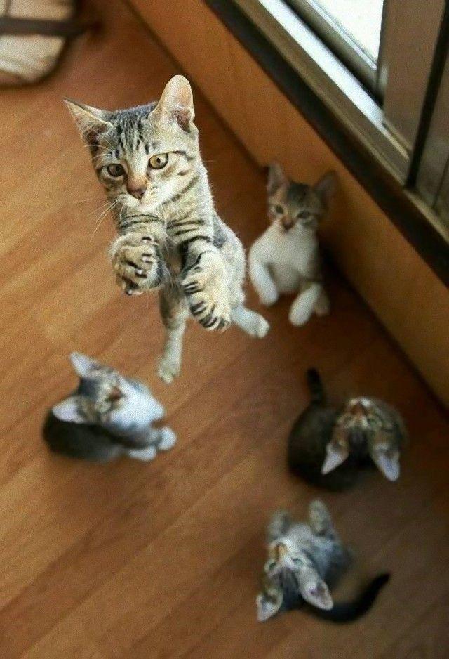 flyingcats2_e