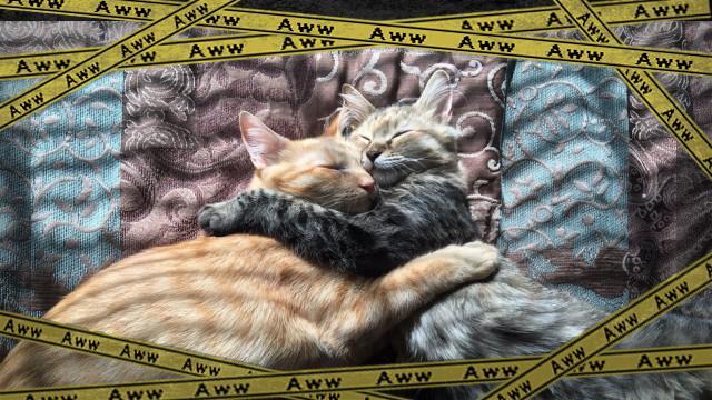cats-1_e-frame