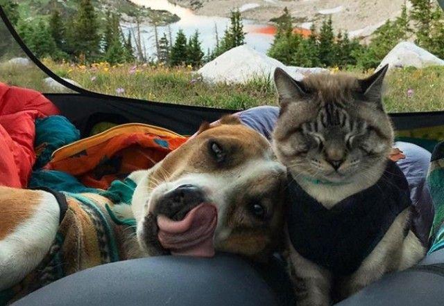 2人と2匹はいつもいっしょ!犬と猫と飼い主が織りなすやさしい旅の物語