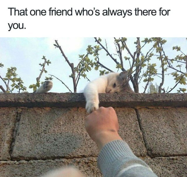 Funny-Wholesome-Animal-Memes-25-58f0887016615__700_e