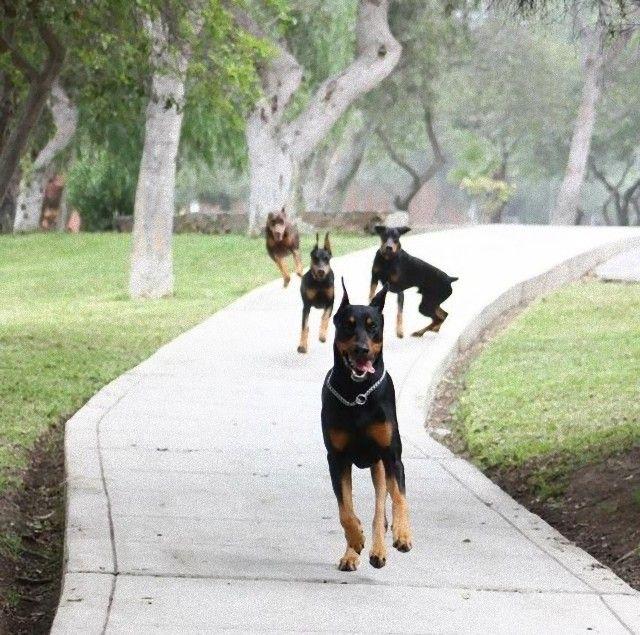 犬と馬5_e
