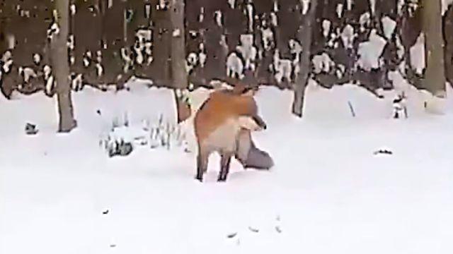 foxntoy3