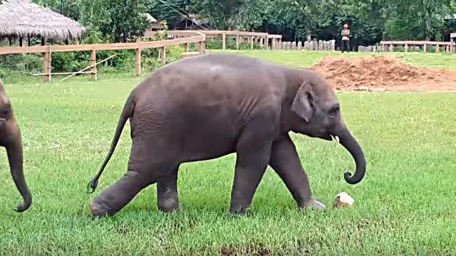 elephantplayingball0