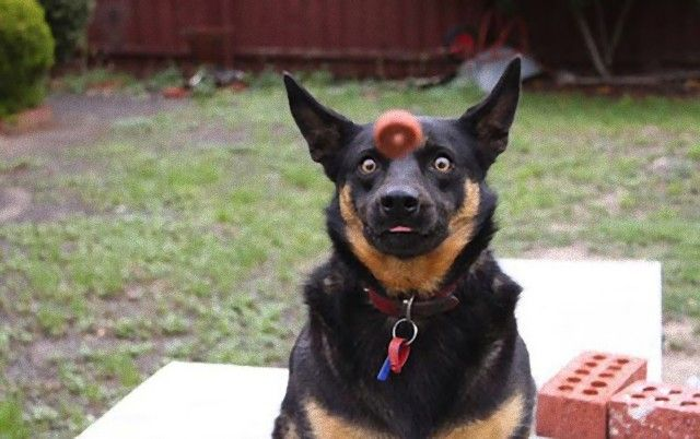 perfectly-timed-photos-dogs-21_e