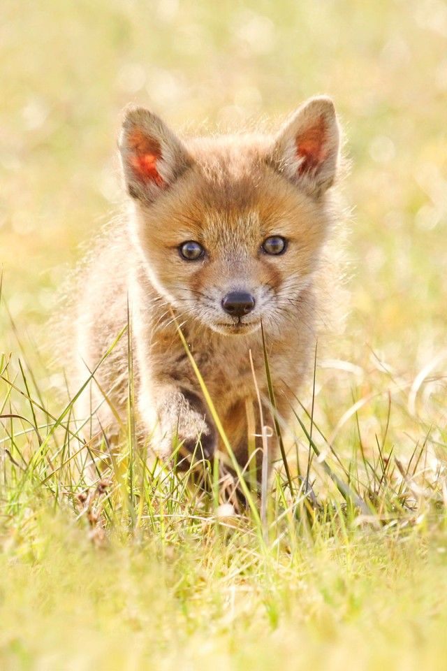 fox10_e