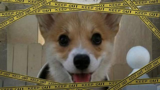 dog-1 [www-frame