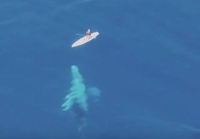 whalesnpaddleboarder2_e
